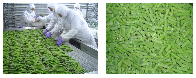 Chuyển giao Quy trình sản xuất các sản phẩm từ măng tây -2