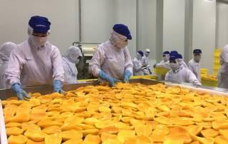 Tại một nhà máy chế biến trái cây lớn ở phía Nam