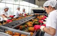 Rau quả Việt được nhật ưu chuộng
