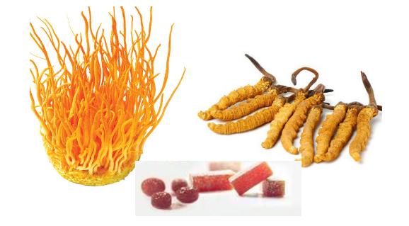 Chuyển giao công nghệ sản xuất kẹo đông trùng hạ thảo