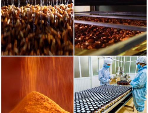 Khám phá quy trình hiện đại chiết xuất curcumin từ củ nghệ tươi
