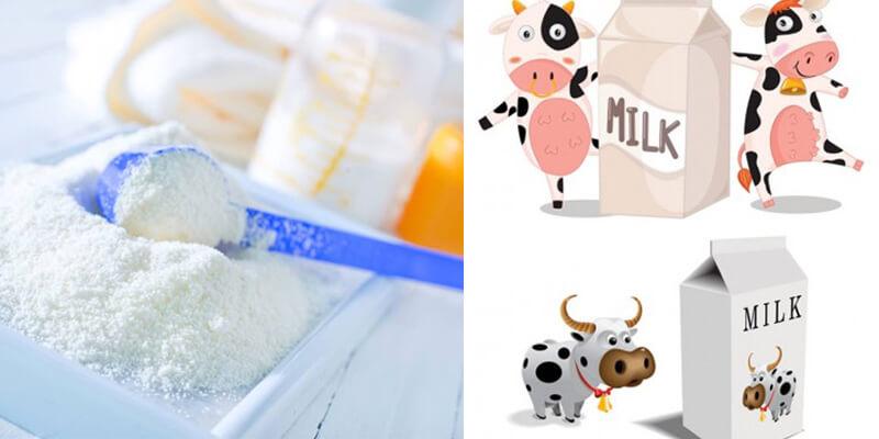 Phổ biến nhất là sữa bột từ sữa bò